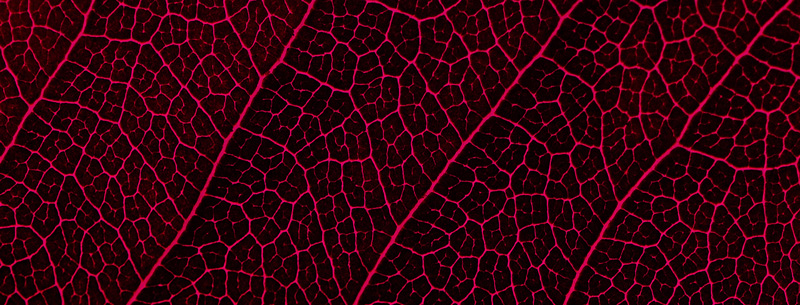 an extreme close up of a leaf